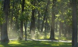 Light mist in the morning fresh summer forest.  stock photo