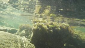 Light movement of the camera under water on a stony bank slow motion. Light movement of the camera under water on a stony shore. stones and water are turbid and stock video