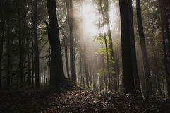 Light in mysterious forest with fog Stock Photos
