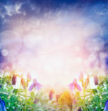 Light nature background with summer flowers over bokeh Stock Photography