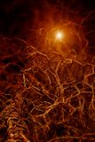 Light in night forest. Mysterious picture of night forest. Gnarled branches with bright orange light Royalty Free Stock Image