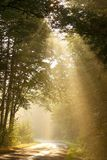 Light Of The Rising Sun Falls In The Autumn Woods Stock Image