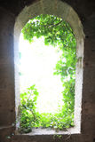 Light from outside with leaves. In castle Stock Images