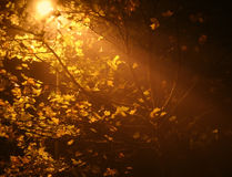 Light over tree. Night with misty light through the tree royalty free stock images