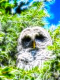 Light owl Watching Royalty Free Stock Photo