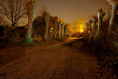 Light painted deserted path pollard willow, Antwerp, Belgium. Row of pollard willows with ivy along a deserted walking path at night lighted by light painting Stock Photography