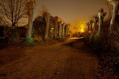 Light painted deserted path pollard willow, Antwerp, Belgium Stock Photography