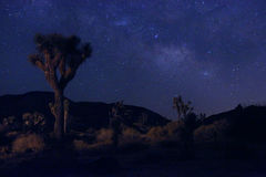 Light Painted Landscape of Camping and Stars Stock Photography