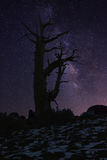 Light Painted Landscape of  Stars in Bristlecone Pines Stock Images
