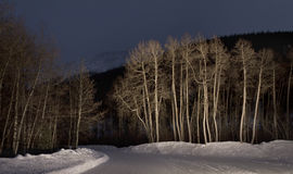Light Painted Trees Royalty Free Stock Photography