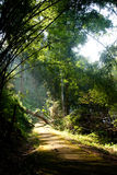 Light on the path. Sunlight shines on the path in the forest Royalty Free Stock Image