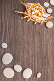 Light pebbles and big shell on  ebony background Stock Photography