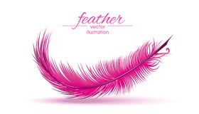 Light pink feather isolated on white background. Vector illustration vector illustration