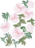 Light pink flowers with green leaves Stock Photos