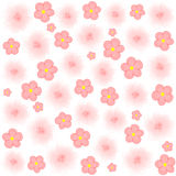 Light pink flowers on white background Royalty Free Stock Photo