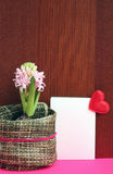 Light pink hyacinth and a love message. With heart Royalty Free Stock Photo