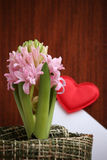 Light pink hyacinth and a love message. With heart Stock Photo
