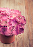 A light pink hydrangea flower in a flowerpot on a vintage retro surface. A light pink hydrangea flower in a flowerpot on a vintage retro background stock images