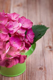 A light pink hydrangea flower in a green watering can Royalty Free Stock Image