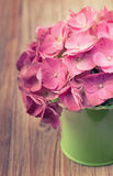 A light pink hydrangea flower in a green watering can Stock Photos
