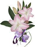 Light pink lily flowers and lilac bow Stock Images