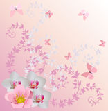 Light pink orchid decoration and butterflies Stock Photo
