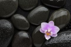 light pink orchid lying on wet black stones. Viewed from above. Spa concept stock photo