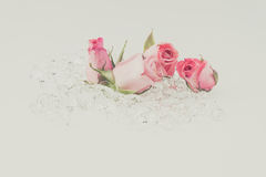Light pink rose with crystal on white background Royalty Free Stock Images