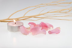 Light pink rose and dried wood stick with tea light candle Stock Images