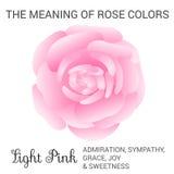 Light pink rose Stock Image
