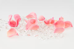 Light pink rose petal with crystal on white background Stock Images