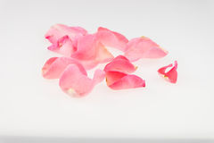 Light pink rose petal on white background Royalty Free Stock Photography