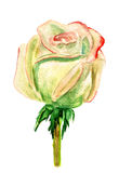 Light pink rose watercolor Royalty Free Stock Image