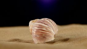 Light pink sea shells with sand and back light stock video footage