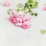 Light pink spring ranunkulus flowers on white marble background Royalty Free Stock Photo