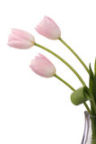 Light pink tulips Royalty Free Stock Photos