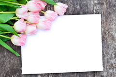 Light pink tulips on the oak brown table  with white sheet of pap Stock Image