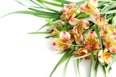 Light pink and yellow beautiful flower Royalty Free Stock Images