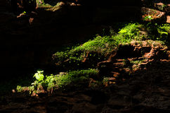 Light in plants and rocks Royalty Free Stock Photo