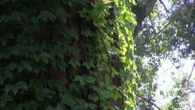 Light of plants stock video