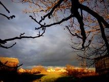 Light play under the nut tree stock image