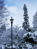 Light pole. Winter trees in snow Royalty Free Stock Photo