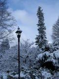 Winter. Light pole. Light pole. Winter trees in snow Royalty Free Stock Photo