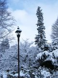 Light pole. Winter. Trees in snow royalty free stock photography