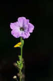 Light purple flower isolated on black background - vertical view Stock Photo