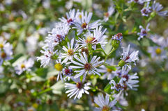 Light Purple Flowers. Pretty wild flowers that were in bloom stock images