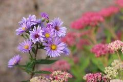 Light purple flowers stock photo