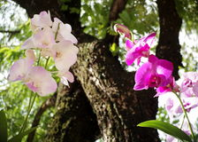 Light purple orchids Royalty Free Stock Photo