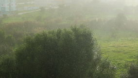 Light Rain on a Background of Trees and Field. Sunny day stock video footage
