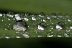 Light rainfall Stock Photography